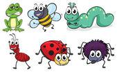 různé hmyz a zvířata