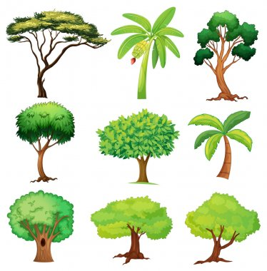 Illustration of various trees on a white background clip art vector