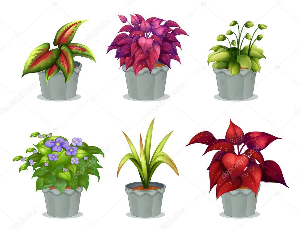 Seis diferentes plantas vector de stock interactimages for Diferentes plantas ornamentales