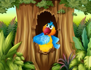 A parrot inside a tree hollow