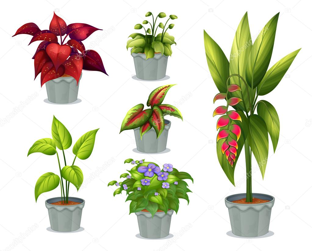 Six ornamental plants stock vector interactimages for 5 nombres de plantas ornamentales
