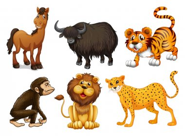 Different kinds of four-legged animals