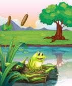 Ein Frosch über einen Koffer mit Algen