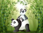 Fotografia due Panda allinterno della foresta di bambù