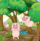 Three pigs playing in the forest