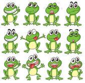 Fotografia facce diverse di una rana