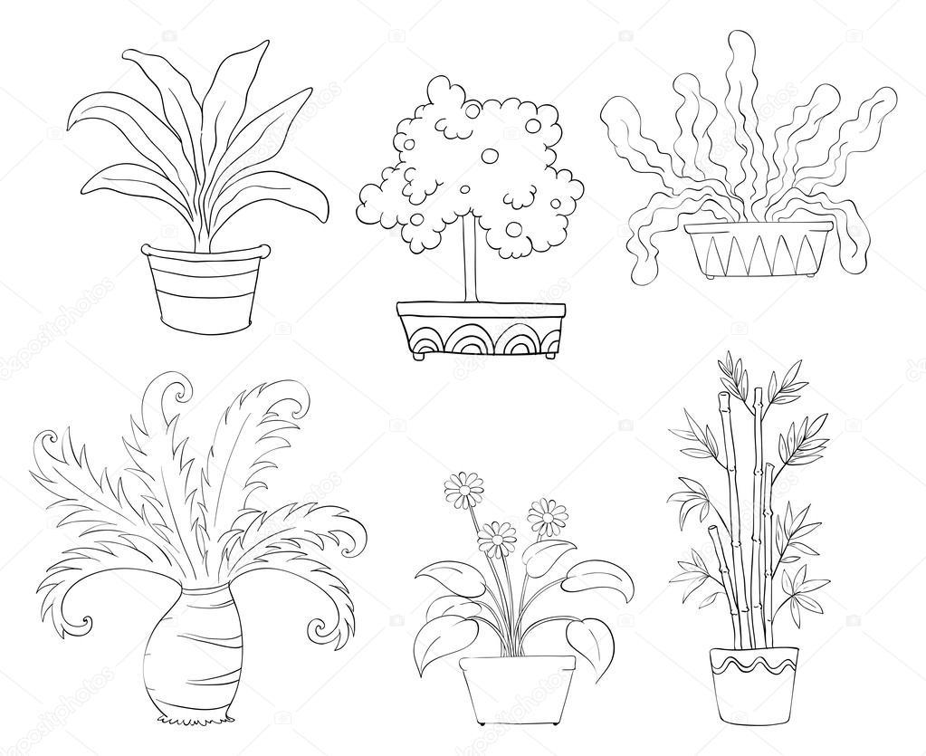 Sei diversi tipi di piante vettoriali stock interactimages 24581297 - Diversi tipi di figa ...