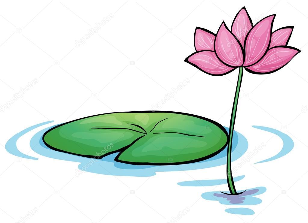 Eine Seerose Blume Stockvektor 169 Interactimages 24928147