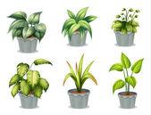 Hat leveles növények, pot