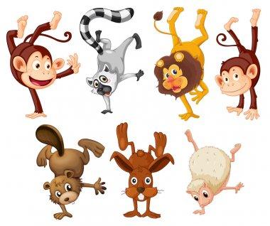 Different animals doing handstands