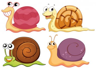 Four snails with different shells