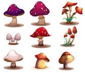 Különböző gombák