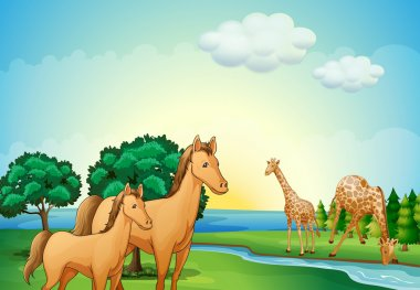Horses and giraffe near the river