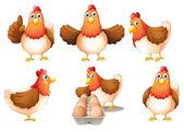 Fotografia Un gruppo di galline grasse