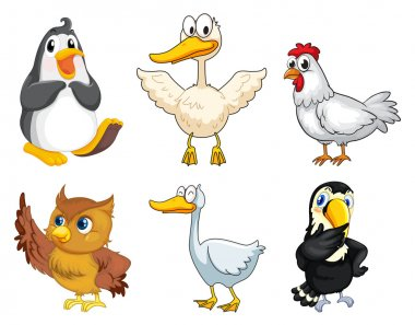 Six different kinds of birds