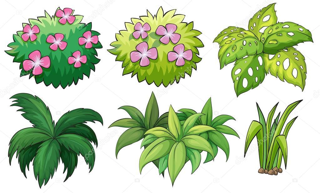 Seis plantas ornamentales vector de stock for Diferentes tipos de plantas ornamentales