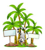 Fotografie A lemur in front of the palm trees with empty wooden boards