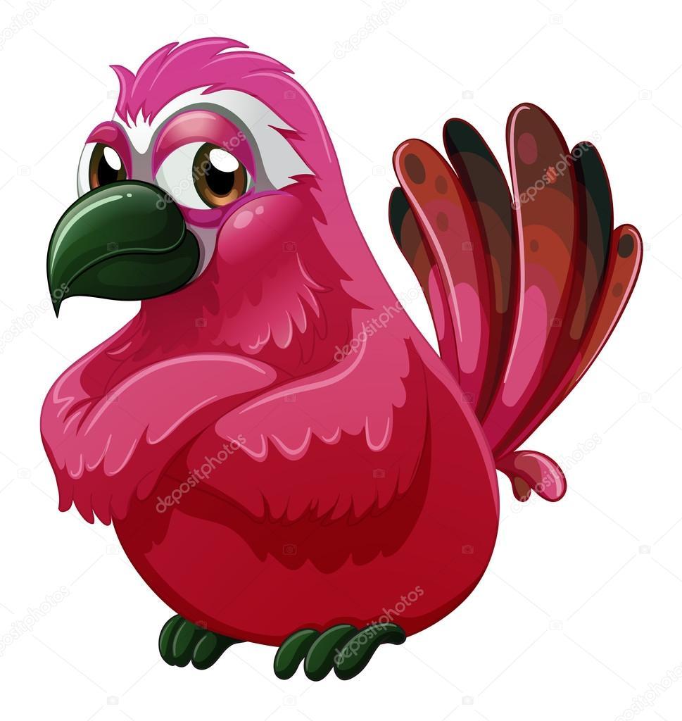 Είναι πουλιά με μακριά πόδια και ράμφος που τους βοηθούν πολύ αφού ζουν.