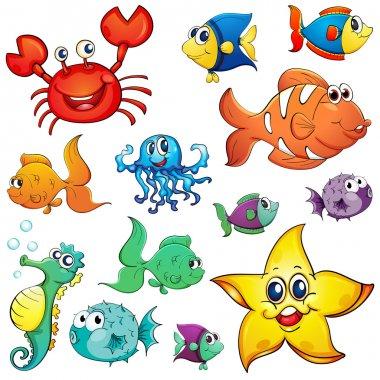 Different sea creatures