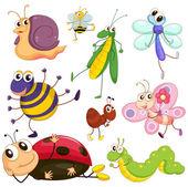 Fotografie různé hmyzu
