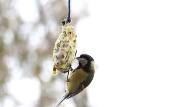 A feeder cinege