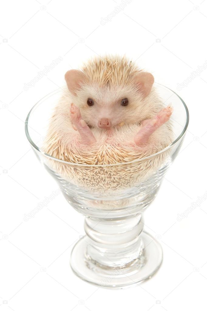 Cute hedgehog in the wine glass