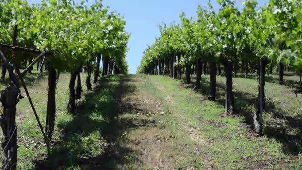 Vinice Napa Valley
