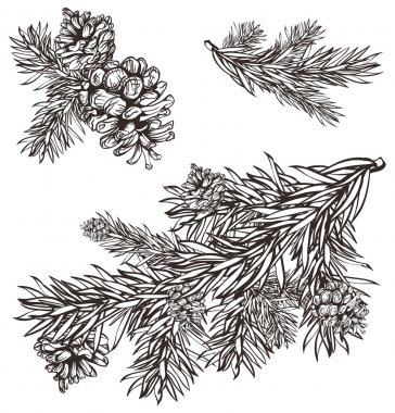 Hand drawn christmas design christmas pine branch and pine cones
