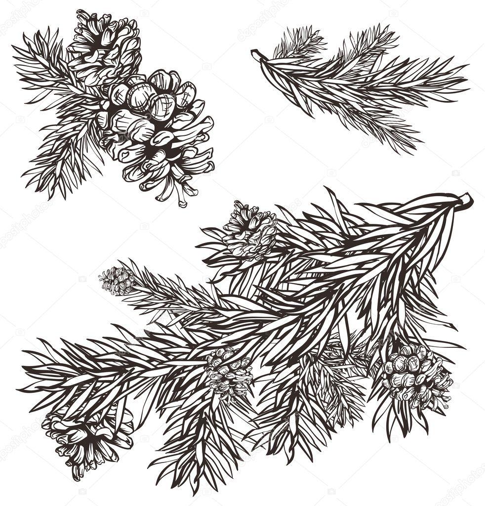 christmas pine cone drawing - photo #34