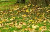 Fall listí na louce