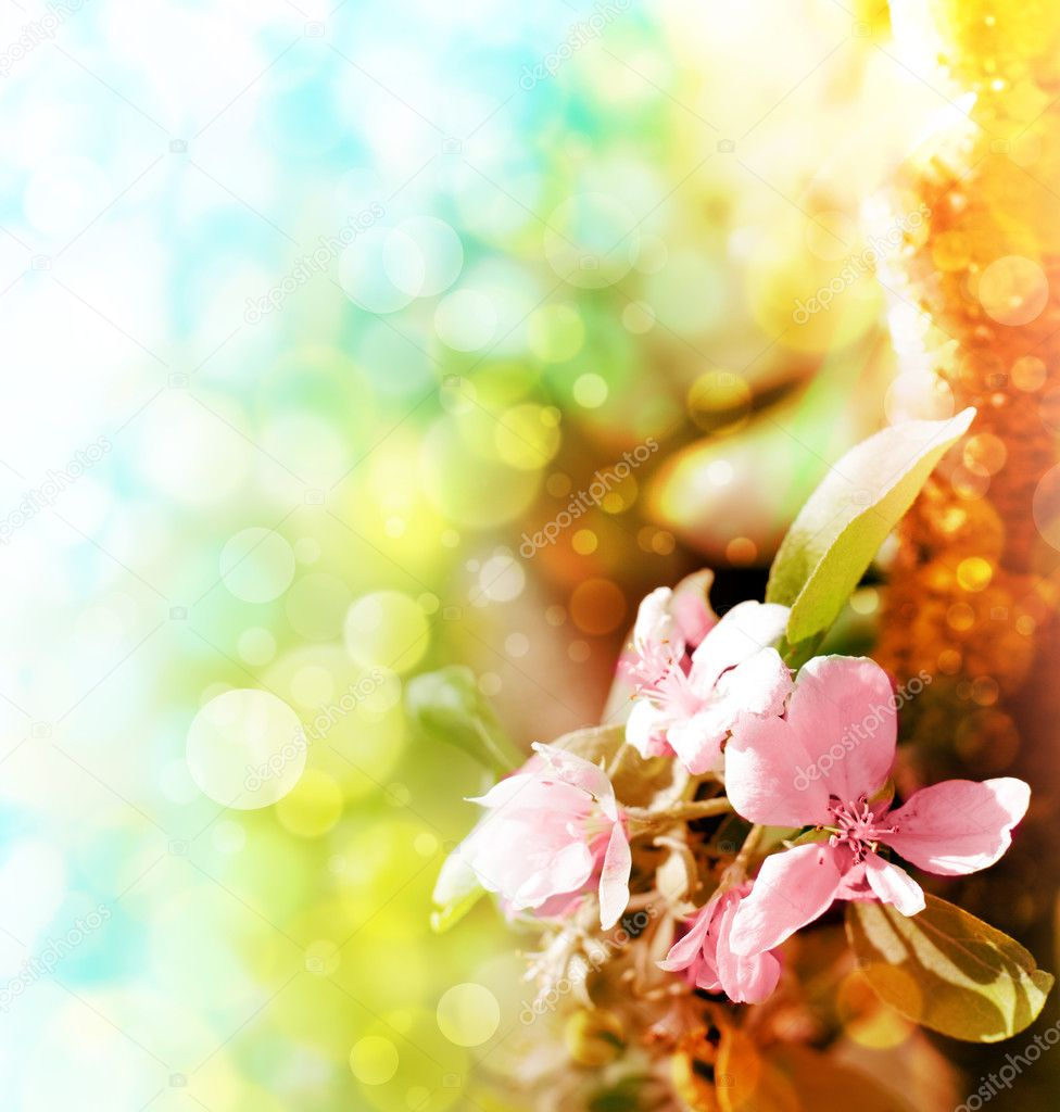 Beautiful spring background with pink flowers