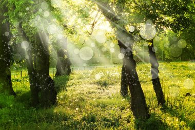 Spring nature background with sun beam, green landscape with sunshine.