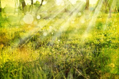 Eco nature with sun beam, green landscape background with sunshine.