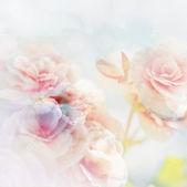 Fotografia Rose vintage
