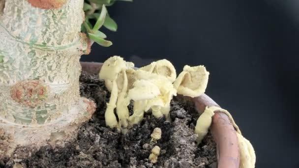 Pilze sterben