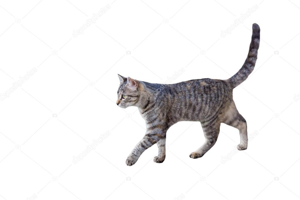 Tabby chaton marche image libre de droit par Saaaaa ...