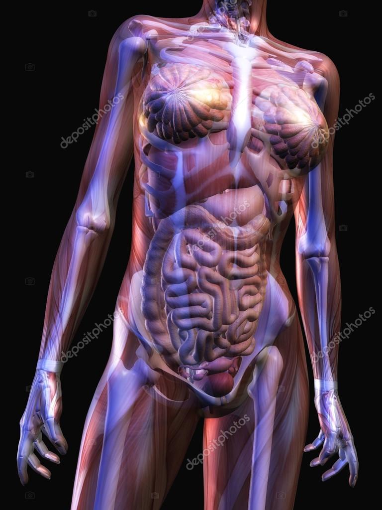 menschliche Anatomie — Stockfoto © 3quarks #36588805