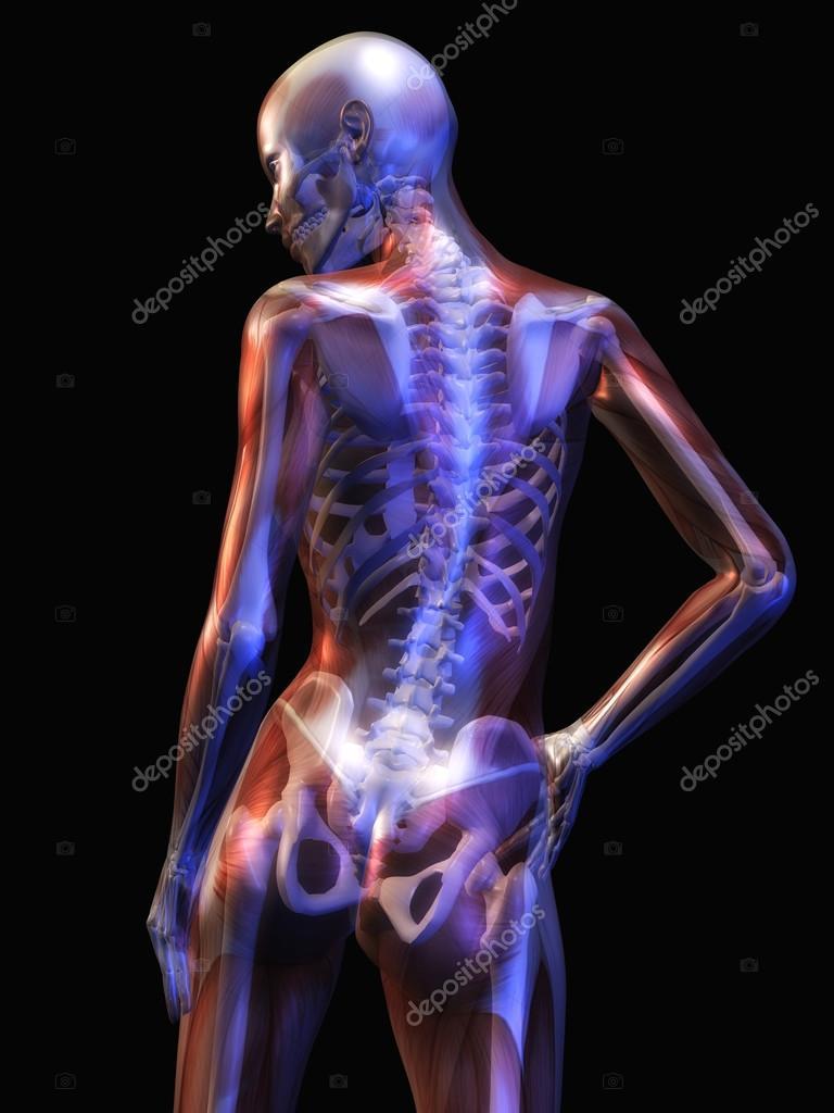 anatomía humana — Fotos de Stock © 3quarks #36588915