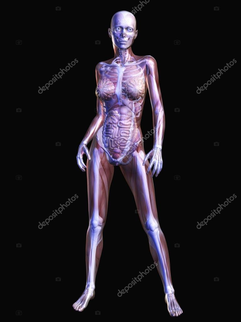 menschliche Anatomie — Stockfoto © 3quarks #51099607
