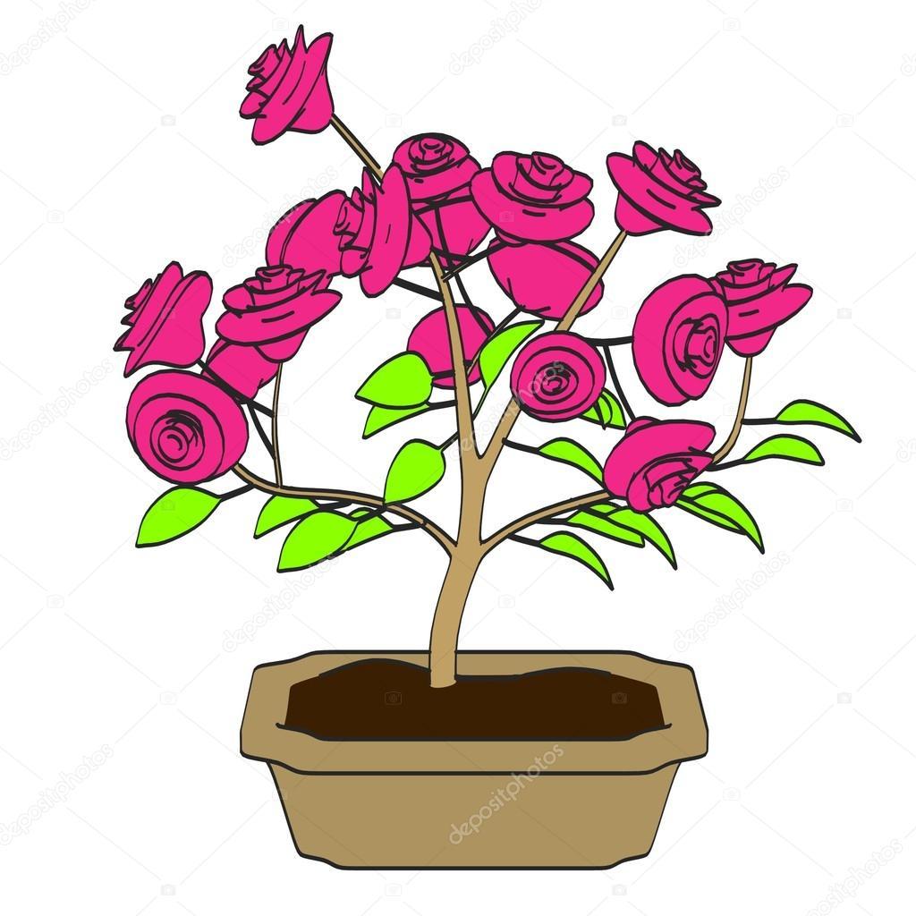 Cartoon Image Of Bonsai Tree Stock Photo C 3drenderings 36724211