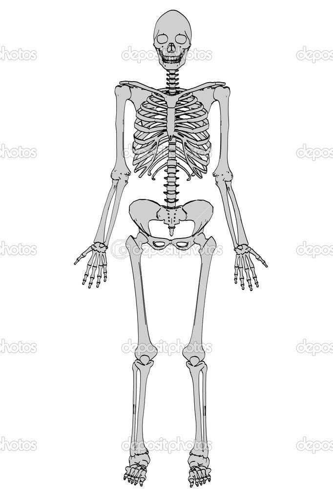Caricatura de esqueleto femenino — Foto de stock © 3drenderings ...