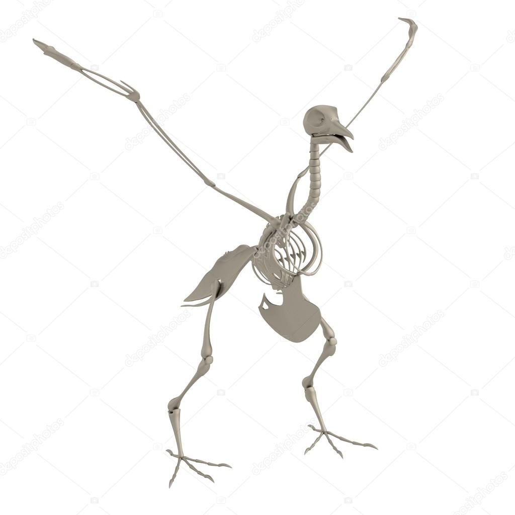 realistische 3d Render Vogel Skelett — Stockfoto © 3drenderings ...