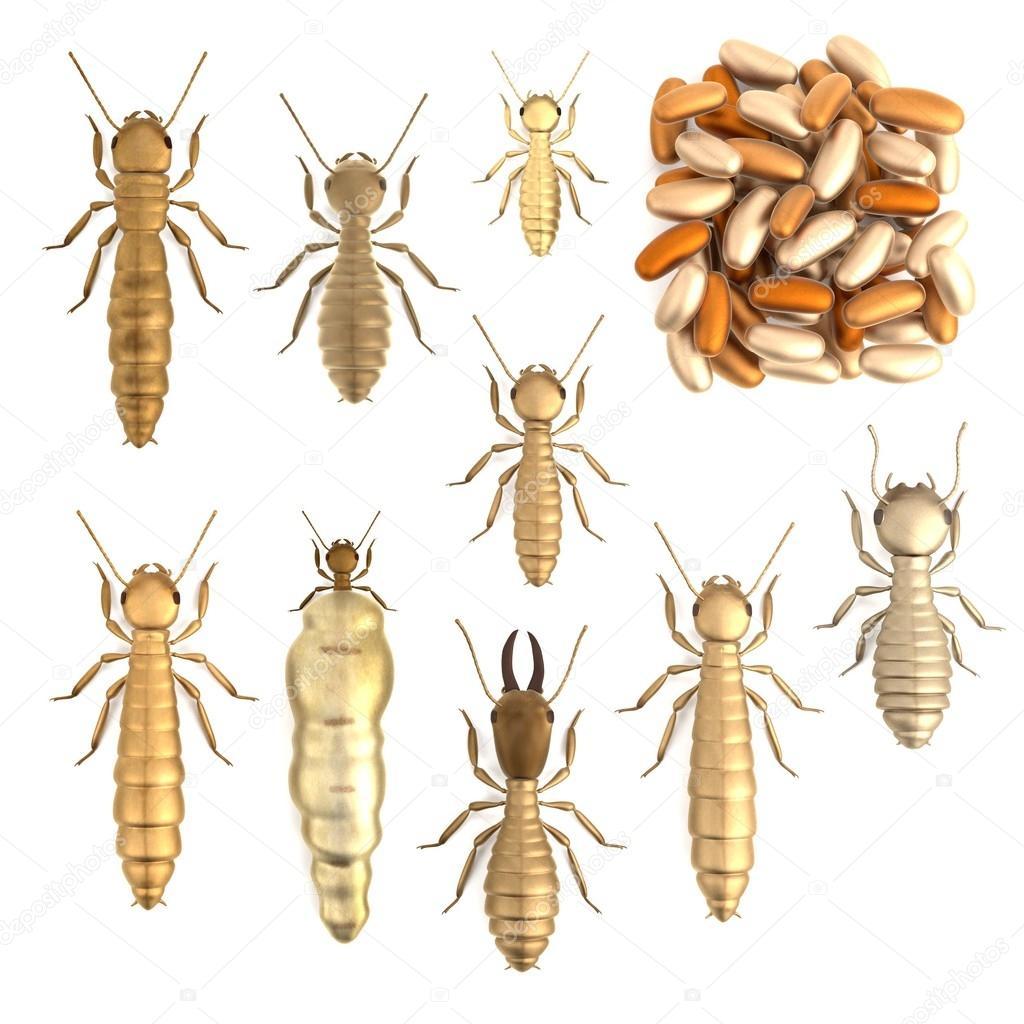 render 3d realista de termitas conjunto — Foto de stock ...