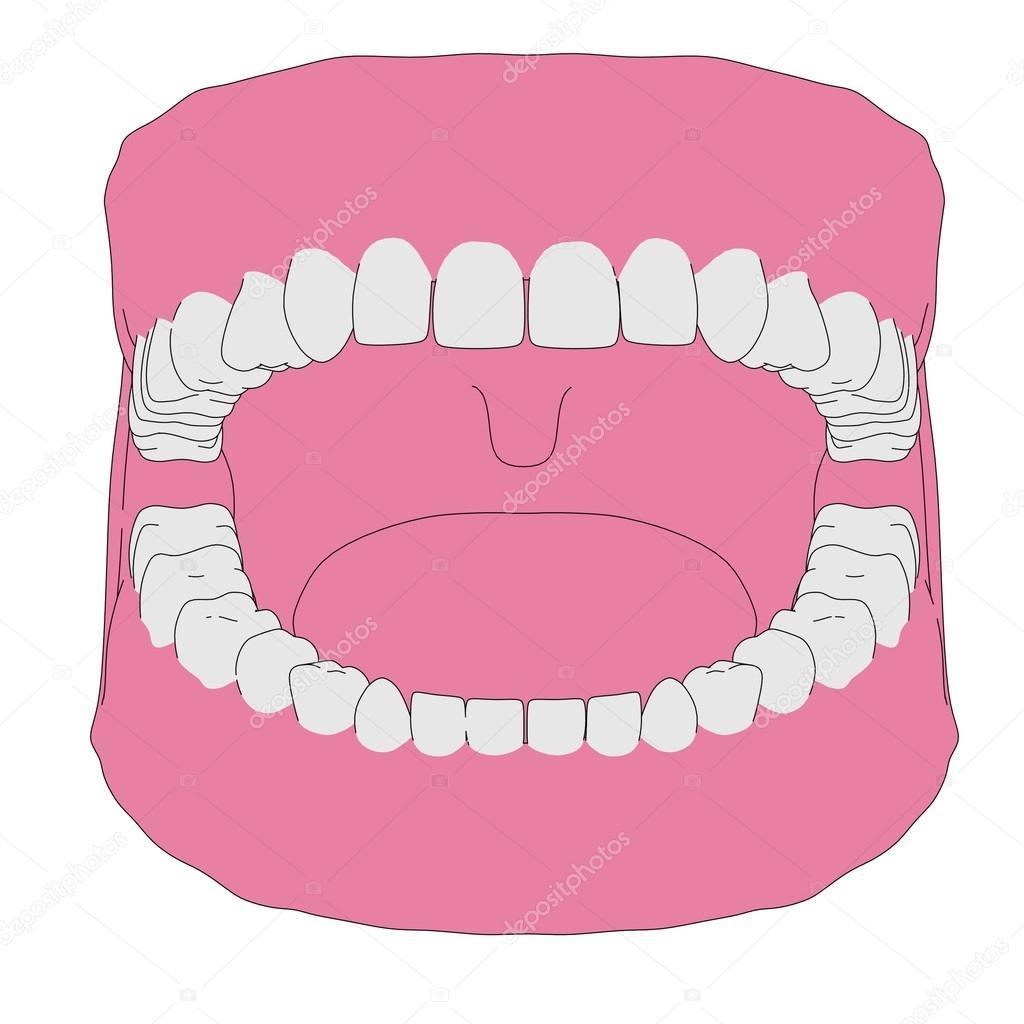 Caricatura de dientes humanos — Foto de stock © 3drenderings #44126657