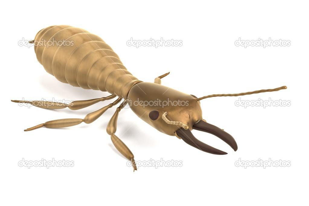 realistische 3d Render Termite Soldaten — Stockfoto © 3drenderings ...