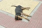 Fotografie Roztomilý pes spí