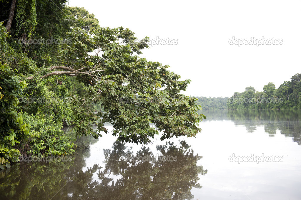River at Tambopata Province