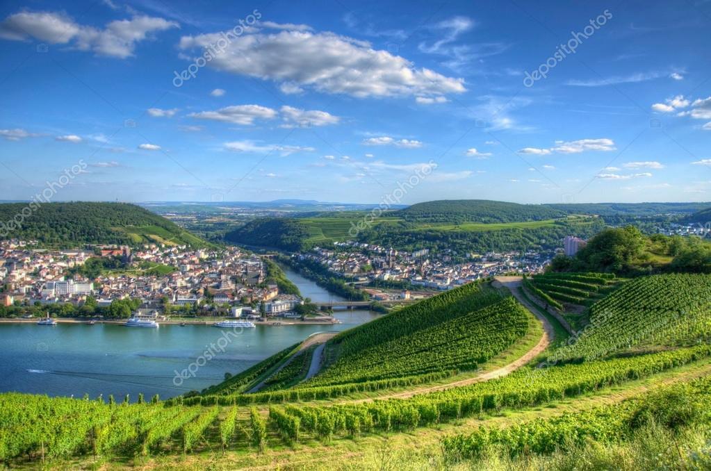 Vineyard near Burg Ehrenfels, Ruedelsheim, Hessen, Germany