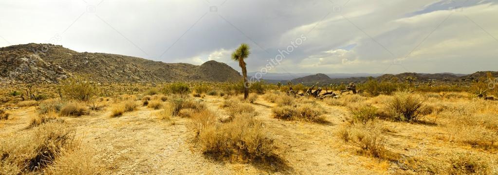 Panoramic photo of Joshua Tree National Park.