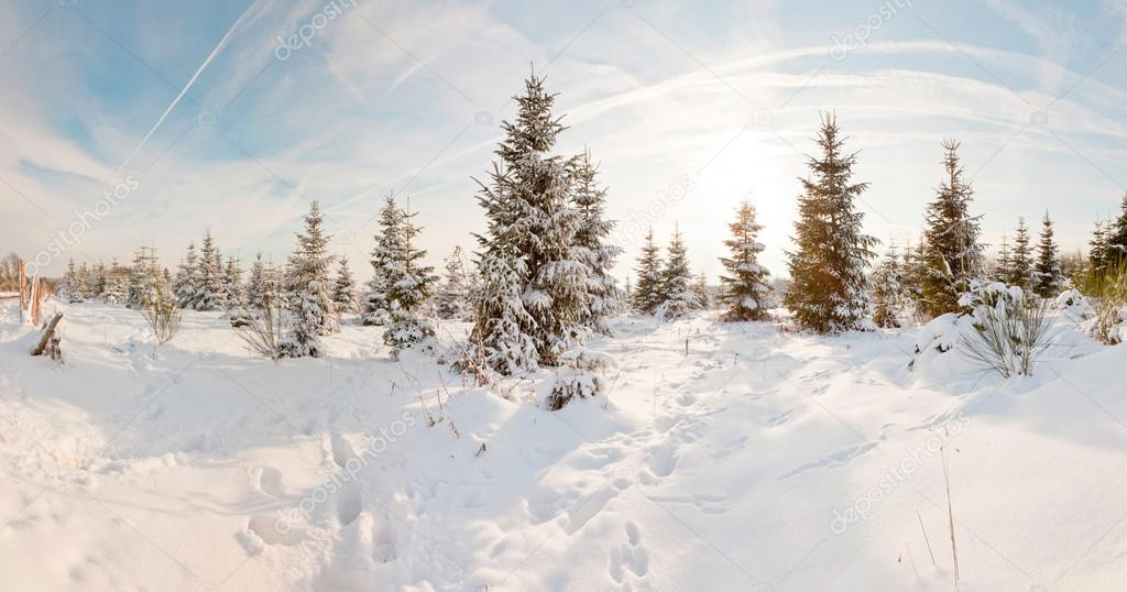 Winter snow landscape. Panoramic shot.